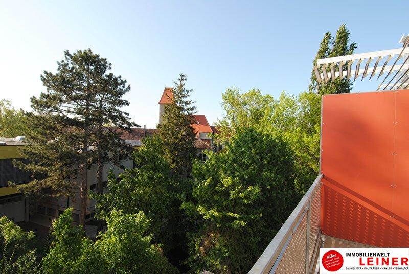 51 m² Mietwohnung in Himberg - hier wird Ihr Wohntraum wahr! Objekt_9686 Bild_762