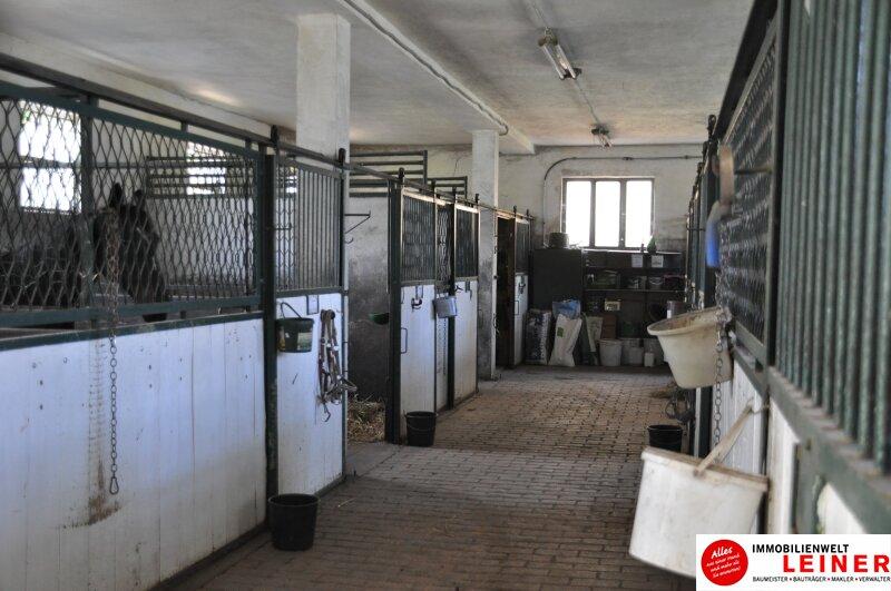 Pferde/Tierliebhaber aufgepasst! Verwirklichen Sie sich Ihren Traum vom eigenen Haus + Pferdestall! Nähe Wien! Objekt_6933 Bild_404