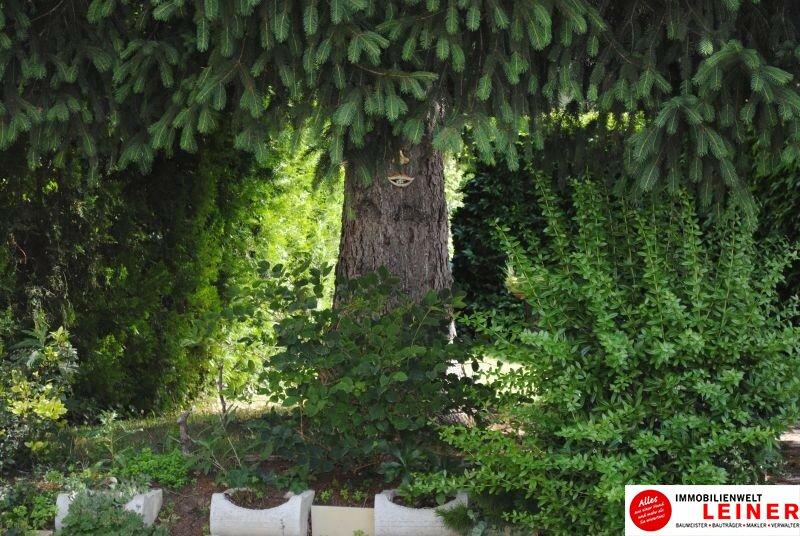 Schwechat - eine kompakte Gartenwohnung in der Stadt Objekt_9508 Bild_740