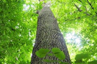 Wald und Wiese im Südburgenland zu verkaufen