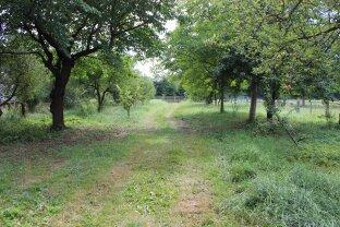 Ebener Baugrund mit Obstbaumbestand