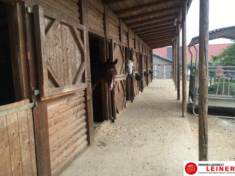 **Pferdebesitzer aufgepasst!! Herrliches Pferdegestüt mit Wohnhaus** Objekt_8744 Bild_355
