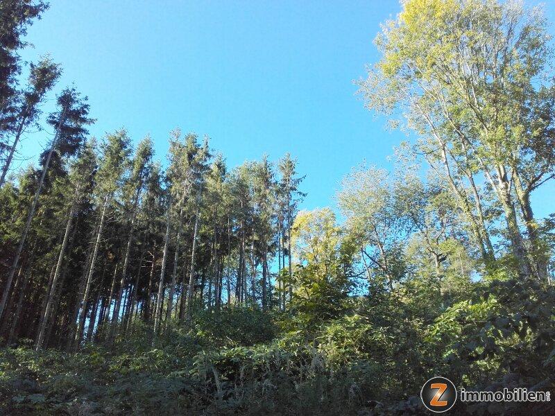 Wald mit guter Zufahrt in Hanglage /  / 7434Bernstein / Bild 1