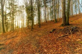 Wienerwald: Großzügiger und gepflegter Forst mit Grünland