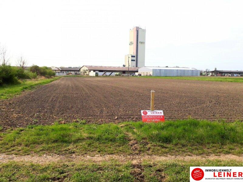 Betriebsgrundstück an der B10 - Enzersdorf an der Fischa! Objekt_10671 Bild_662