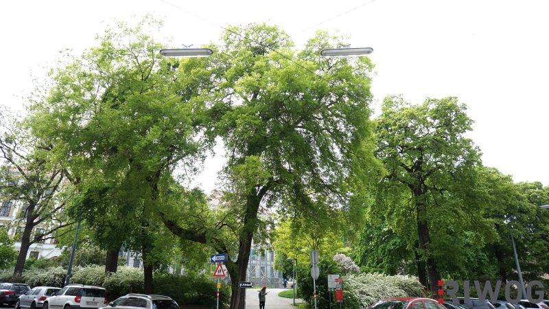 ++TOP LAGE - WUNDERSCHÖNE 2-ZIMMER NÄHE AUMANNPLATZ/SCHUBERT PARK - IDEALER GRUNDRISS++ /  / 1180Wien / Bild 7