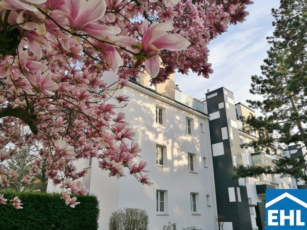 Frühlingserwachen im Westen: 2-Zimmer-Wohnung nahe U4-Hütteldorf