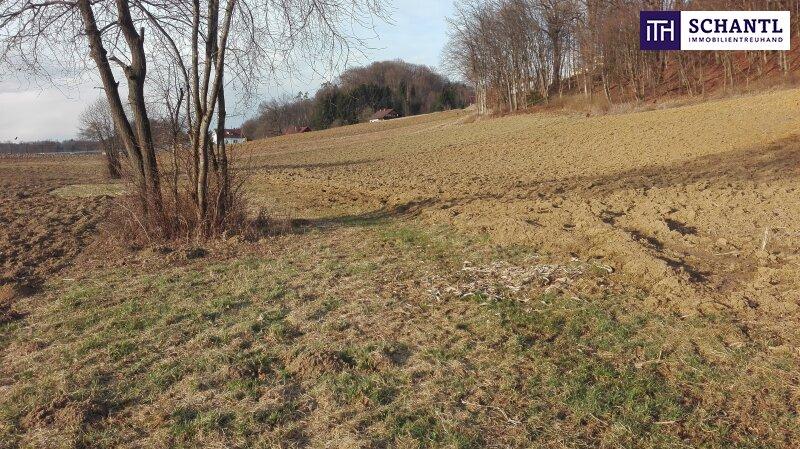 Landwirtschaftliche Fläche ca. 0,55 HA mit kleinen Waldanteil in Wittmannsdorf
