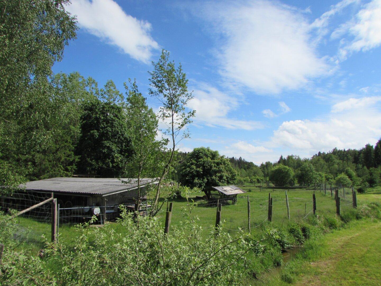 Offenstall und Ausreitgelände in Leopoldsdorf