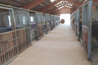 Pferdeboxen zu vermieten!