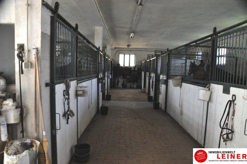 Pferde/Tierliebhaber aufgepasst! Verwirklichen Sie sich Ihren Traum vom eigenen Haus + Pferdestall! Nähe Wien! Objekt_6933 Bild_403