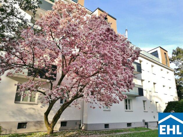 Frühlingserwachen: 2-Zimmer-Wohnung direkt bei der U4-Hütteldorf